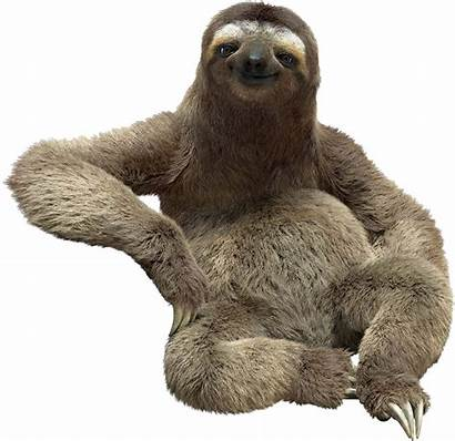 Sloth Transparent Cartoon Clipart Jing Fm