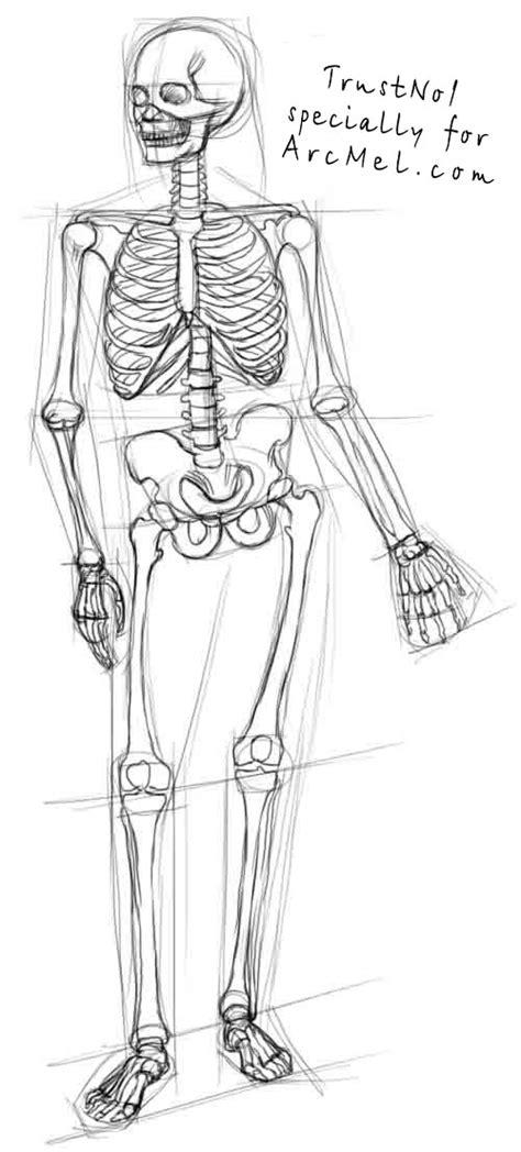 How Draw Skeleton Step Arcmel
