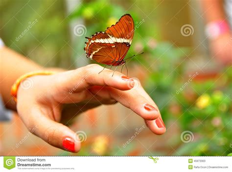 Monarch Butterfly On The Hand Stock Photo