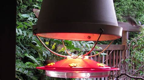 winter hummingbird feeder youtube