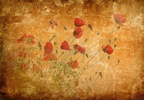 grunge poppies background stock photo image  paper
