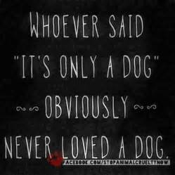 I Love My Dog Quotes Extraordinary Love Quotes For My Dog  Quotes I Love My Pets Quotesgram