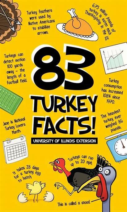 Thanksgiving Facts Turkey Fun Trivia Classroom Activities