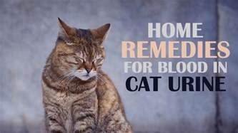 in cat urine home remedies for in cat urine catological