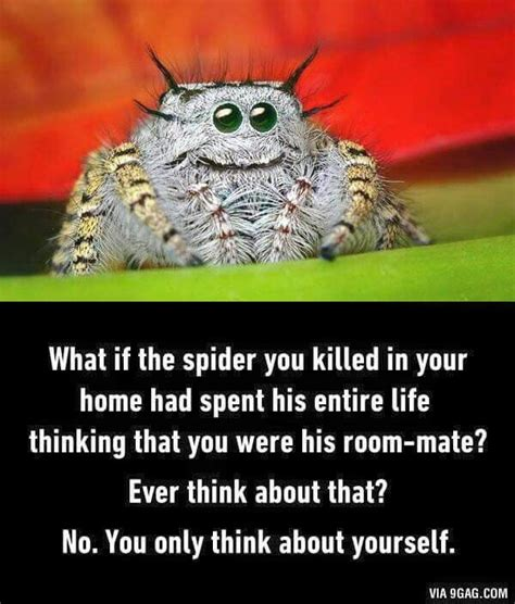 Shower Spider Meme - link25 211 the angelic edition spider