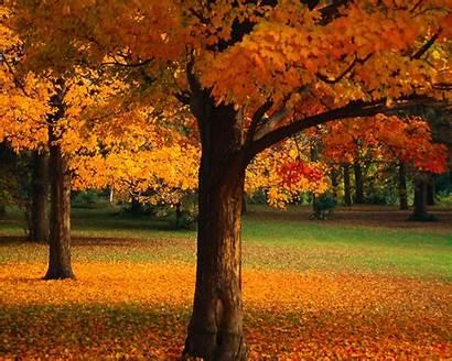 Wallpapers 1024 1280 Desktop Fall Resolution Screen
