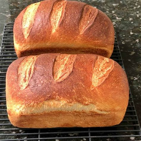 bread sourdough recipe loaves pan loaf bake oven dutch soft put pans homemade artisan food beginner directed enough works right