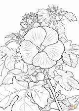 Coloring Hibiscus Pages Hawaiian Pua Flower Printable Aloalo Lei Yellow Hawaii Template Drawing Supercoloring Crafts Sketch Templates State sketch template