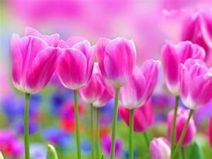 Full HD Flowers Wallpapers