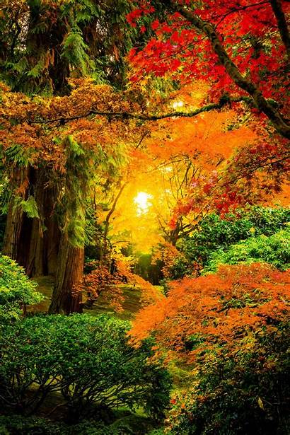 Colors Nature Landscapes Japanese Kind Fall Autumn