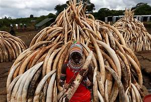 Kenya's big bonfire of ivory | | Al Jazeera