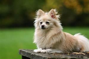 10 Smallest Dog Breeds in the World - Quiet Corner