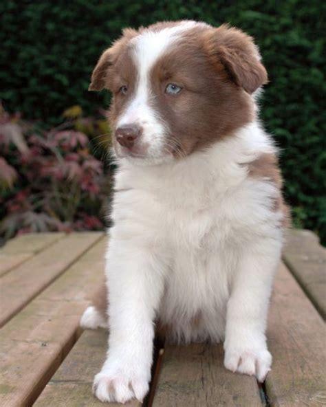 images  dogs  dont shed  pinterest huge