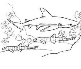 o shark colouring pages coloring home