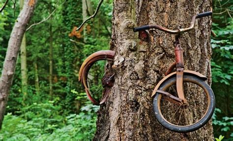 The Story Behind The Bike In The Tree