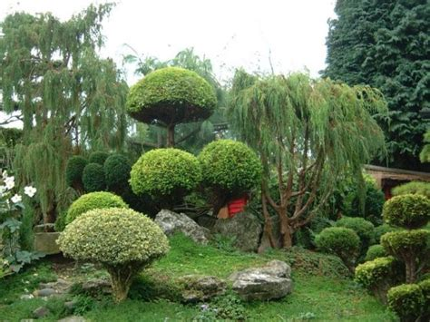 plants in a japanese garden japanese garden ideas plants native home garden design