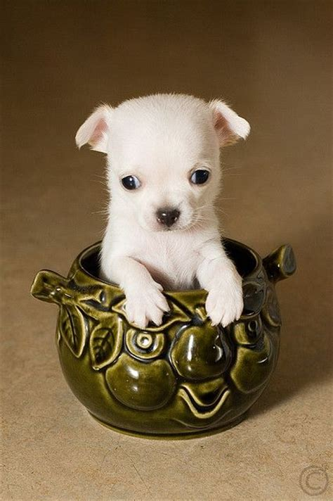 List Of Dogs That Shed Very Little by 25 Best Ideas About Best Small Dogs On Pinterest Best