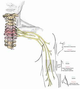 Center For Nerve Injury And Paralysis