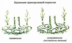 Как принимать семена льна при геморрое