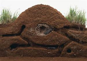 Mole Burrow  Because Moles Have Powerful Paws For Digging