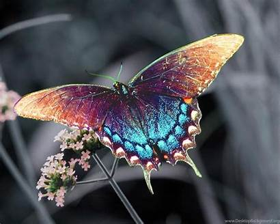 Butterfly Wallpapers Colorful 3d Laptops Computers Desktop