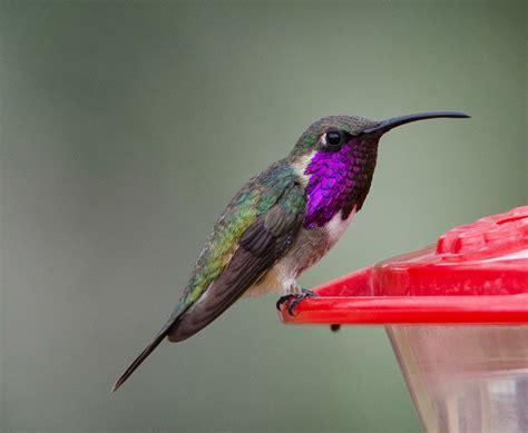 gordon s birding adventures hummingbirds in arizona