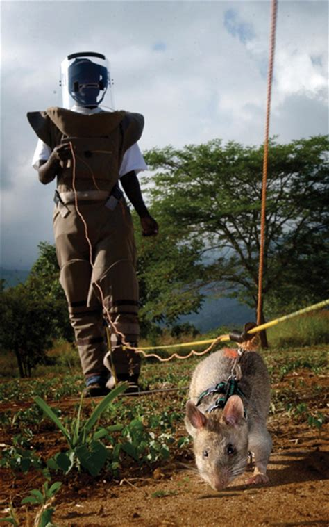 procurando minas terrestres 171 eu podia t 225 matando