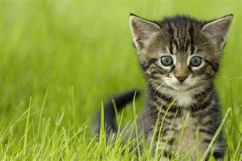 nierenprobleme bei katzen niederoesterreich heute