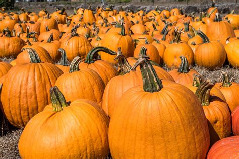 October Themes and Special Events for Elementary School