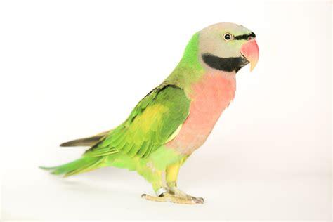 lost bird los angeles california picasso