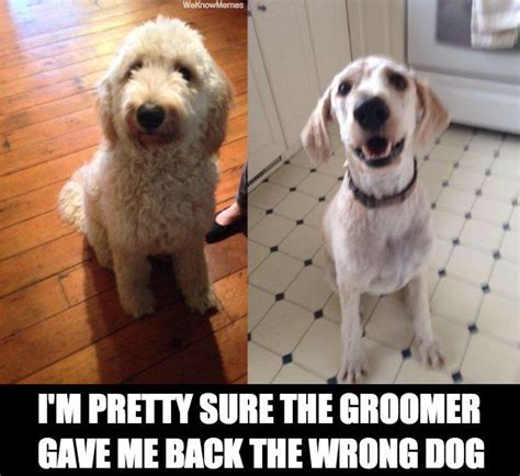Dog Groomer Meme - hey that s not my dog meme collection
