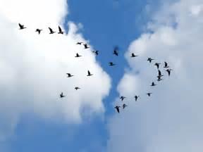si鑒e social lyon rhône un week end pour observer la migration des oiseaux