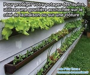 Comment Empecher L Herbe De Pousser Dans Le Gravier : l 39 astuce de jardinier pour prot ger votre potager des lapins ~ Dailycaller-alerts.com Idées de Décoration