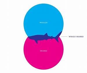 Creative Venn Diagram Design  What Are Whale Sharks