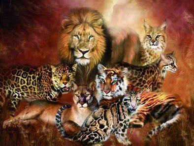 animal pictures amazoncouk