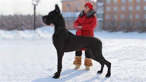 Top 10 Most Unique Dog Breeds YouTube