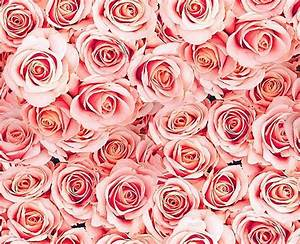 light pink roses background blossoms tumblr branches ...