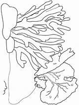 Seaweed Coloring Colors Printable Bright Favorite sketch template
