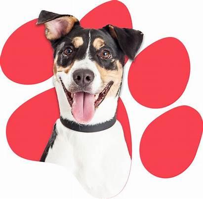 Canine Critics Caninecottages