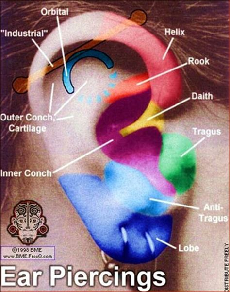 Lobe Ear Piercing Diagram by Piercings Page 3 Forums At Psych Central