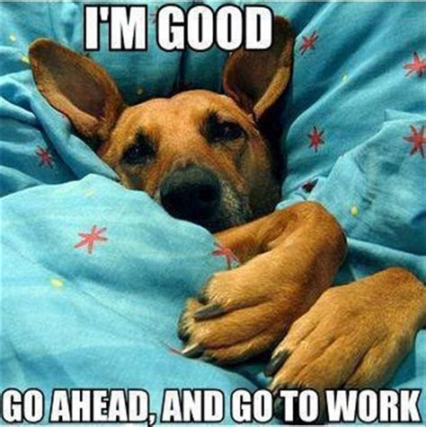 Animal In Bed Meme - dog in your bed funny pictures dump a day