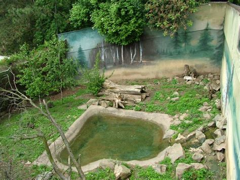 17 Best images about Raccoon Dog Enclosure Ideas on Pinterest