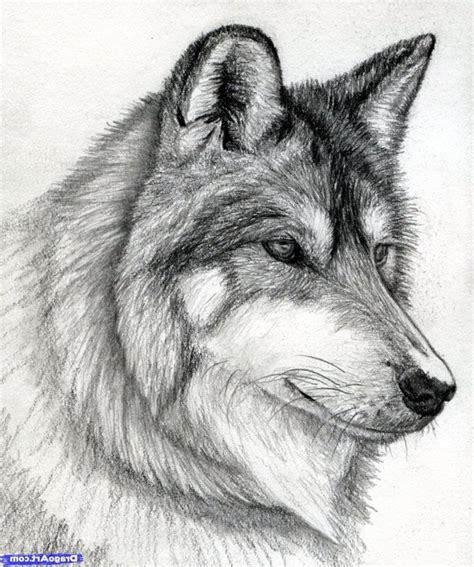 images  wolves pencil sketches  wolves  ideas