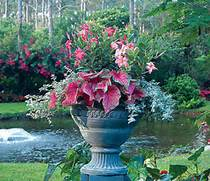 Container Gardening Tips Amp Ideas  Flower Amp Plant Container Gardening