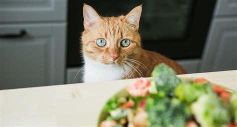 cat friendly vegetables  feed  feline bestie