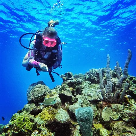 DiveLive With A Marine Biologist - DeeperBlue.com