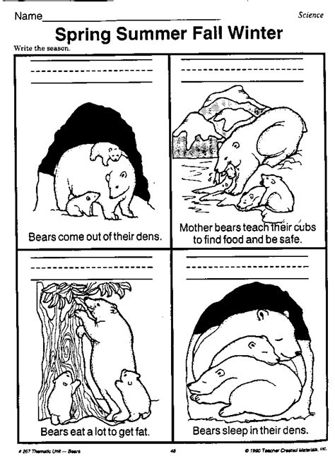 hibernating worksheet beary bears teachers