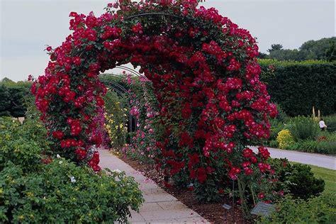 roses gardens rose garden wallpapers wallpaper cave