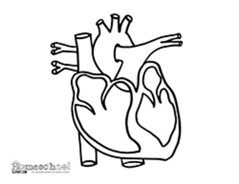 human heart outline drawing  getdrawings