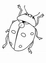 Bug Coloring Pages Bugs Printable Insect Print Ladybug Insects Beetle Comments Cartoon Getcoloringpages Bestcoloringpagesforkids Printcolorfun sketch template